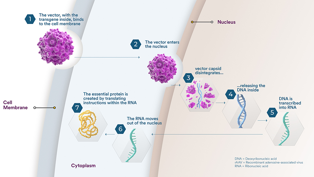 how gene therapy works