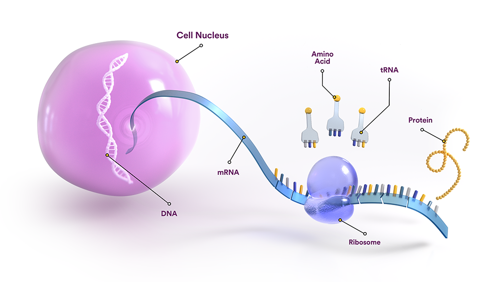 RNA and its role